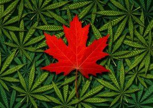 medical marijuana canada