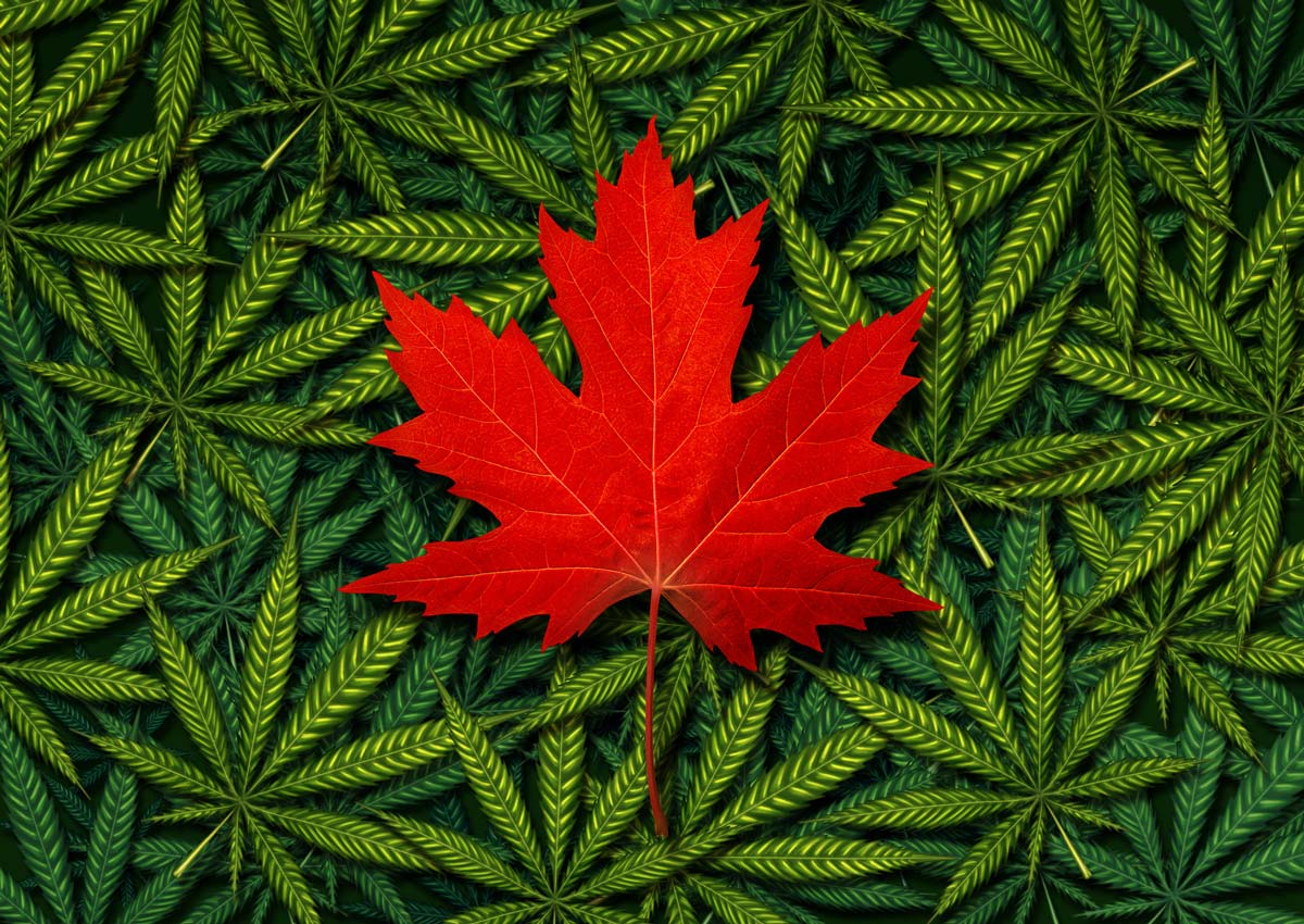 Medical Marijuana for Depression in Canada