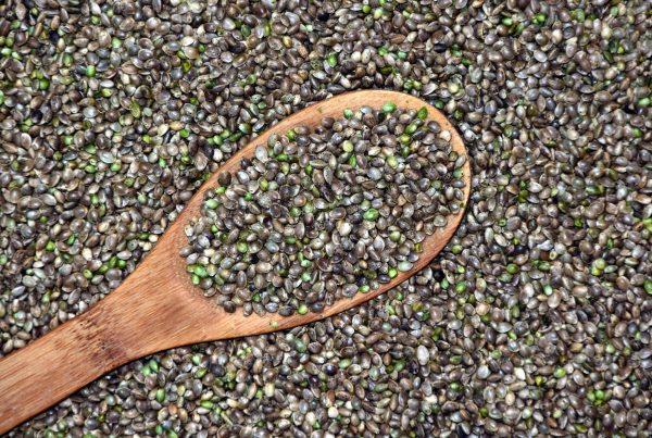 hemp seed for pets